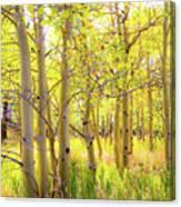 Grove Of Aspens On An Autumn Day Canvas Print