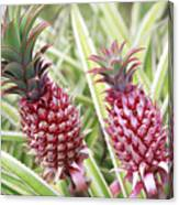 Growing Red Pineapples Canvas Print