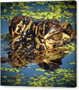 Growing Up Gator, No. 33 Canvas Print