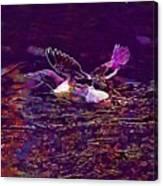 Guillemot Sea Bird Nature Coast  Canvas Print