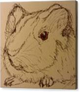 Guinea Pig Canvas Print