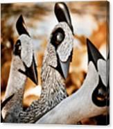 Guineafowl Family Canvas Print