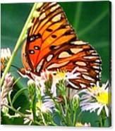 Gulf Fritillary 1 Canvas Print