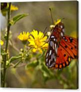 Gulf Fritillary Agraulis Vanillae Red Butterfly Canvas Print