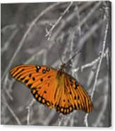 Gulf Fritillary Butterfly In The Brambles Canvas Print