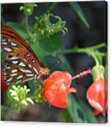 Gulf Fritillary Butterfly On Beautiful Flowers  Canvas Print