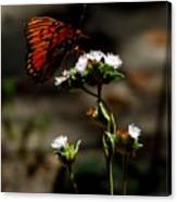 Gulf Fritillary Butterfly Too Canvas Print