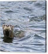 Gulf Islands Otter Canvas Print