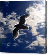 Gull Against Sky Fractal Canvas Print
