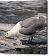 Gull At Surfs Edge Canvas Print