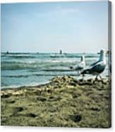 Gull Beach Canvas Print