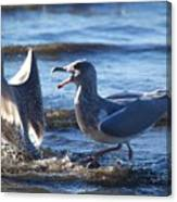 Gull Fighting Canvas Print