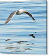 Gull Mirrored Canvas Print