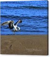 Gull On The Beach  Canvas Print