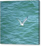 Gull Over The Gulf Canvas Print