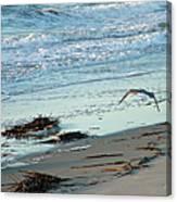 Gull Over Tybee Island Beach Canvas Print