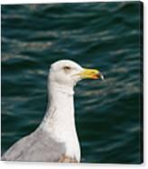 Gull Profile Canvas Print