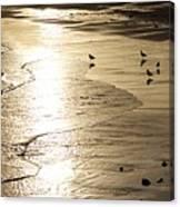 Gulls At Gloucester Canvas Print