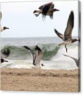 Gulls Away Canvas Print
