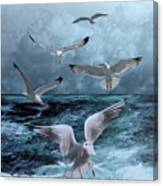 Gulls' Banquet Canvas Print