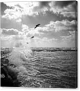 Gulls In A Gale Canvas Print