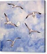 Gulls Is Flight Canvas Print