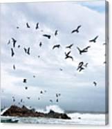 Gulls Of Carmel Canvas Print