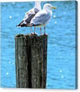 Gulls On Piling Canvas Print