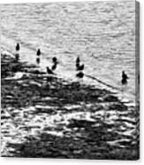 Gulls On The Shore Canvas Print