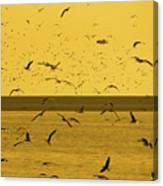 Gulls Orange Tint Canvas Print