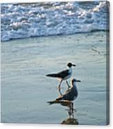 Gulls Strolling Tybee Island Beach Canvas Print