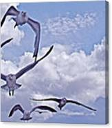 Gulls Will Be Gulls Canvas Print