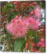 Gum Blossom Canvas Print