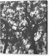 Gunmetal Grey Shadows -  Canvas Print