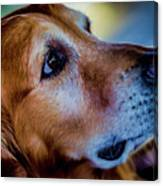 Gus As Photo Assistant 3504 Canvas Print