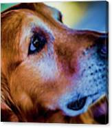 Gus As Photo Assistant 3504t2 Canvas Print