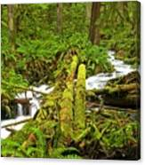 Gushing Through Ferns And Forest Canvas Print
