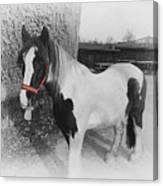 Gypsy Horse Canvas Print