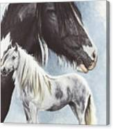 Gypsy Cob  Canvas Print