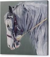 Gypsy Cob Mare-milltown Fair Canvas Print