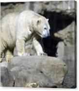 Habitat - Memphis Zoo Canvas Print