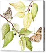Hackberry Emperor Butterfly Canvas Print