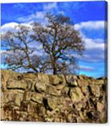 Hadrians Tree Canvas Print
