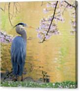 Haiku, Heron And Cherry Blossoms Canvas Print