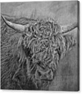 Hairy Highlander Bw Canvas Print