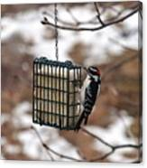 Hairy Woodpecker 2 Canvas Print