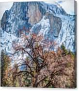 Half Dome Meadow Tree Winter Canvas Print