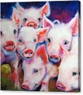 Half Dozen Piglets Canvas Print