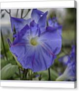 Hameau Bleu Canvas Print