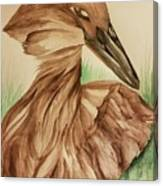 Hamerkop Canvas Print